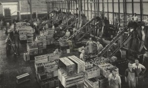 Process workers at work at the Golden Circle cannery in Northgate, Australia.