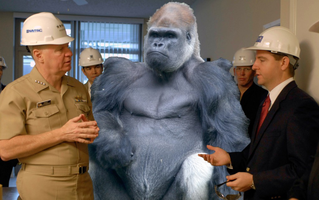 Gorilla in the room