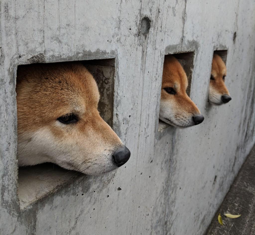 Zentenatamadashi Dogs