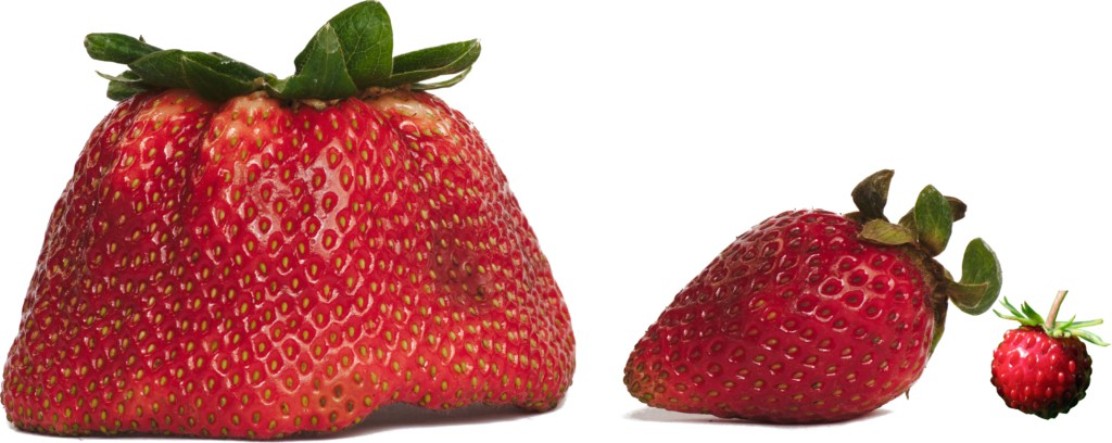 Strawberries Large Medium Small