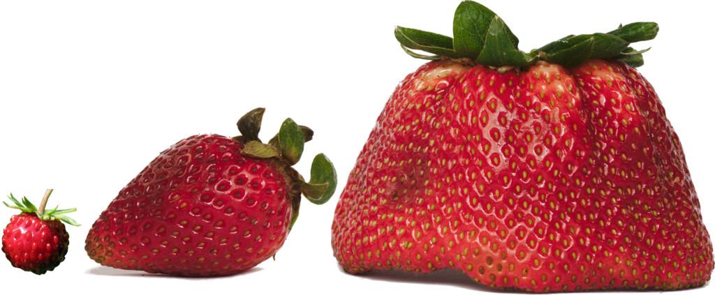 Strawberries Small Medium Large